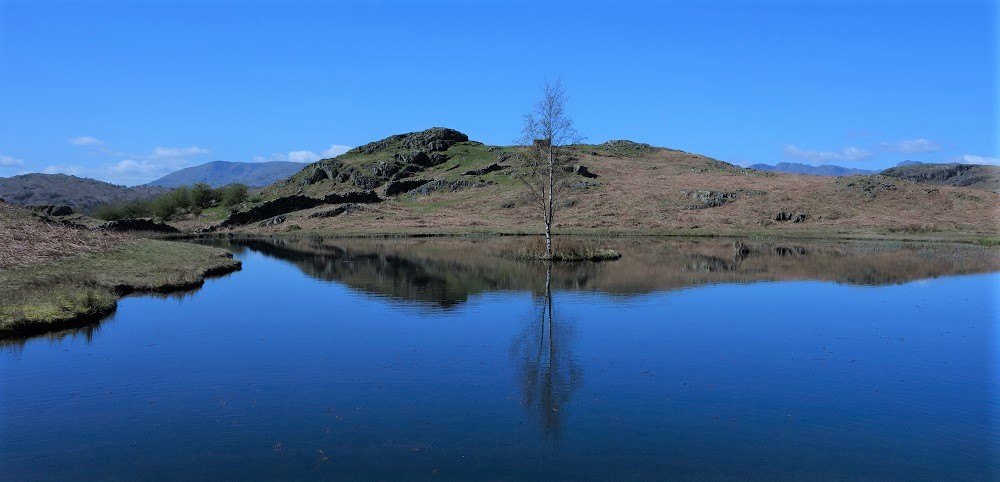 Lily Tarn near Ambleside
