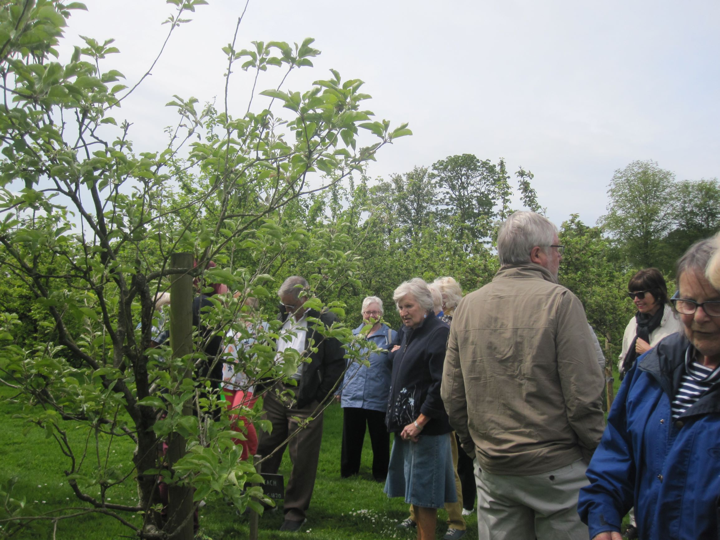 Learning about the growing of Apples