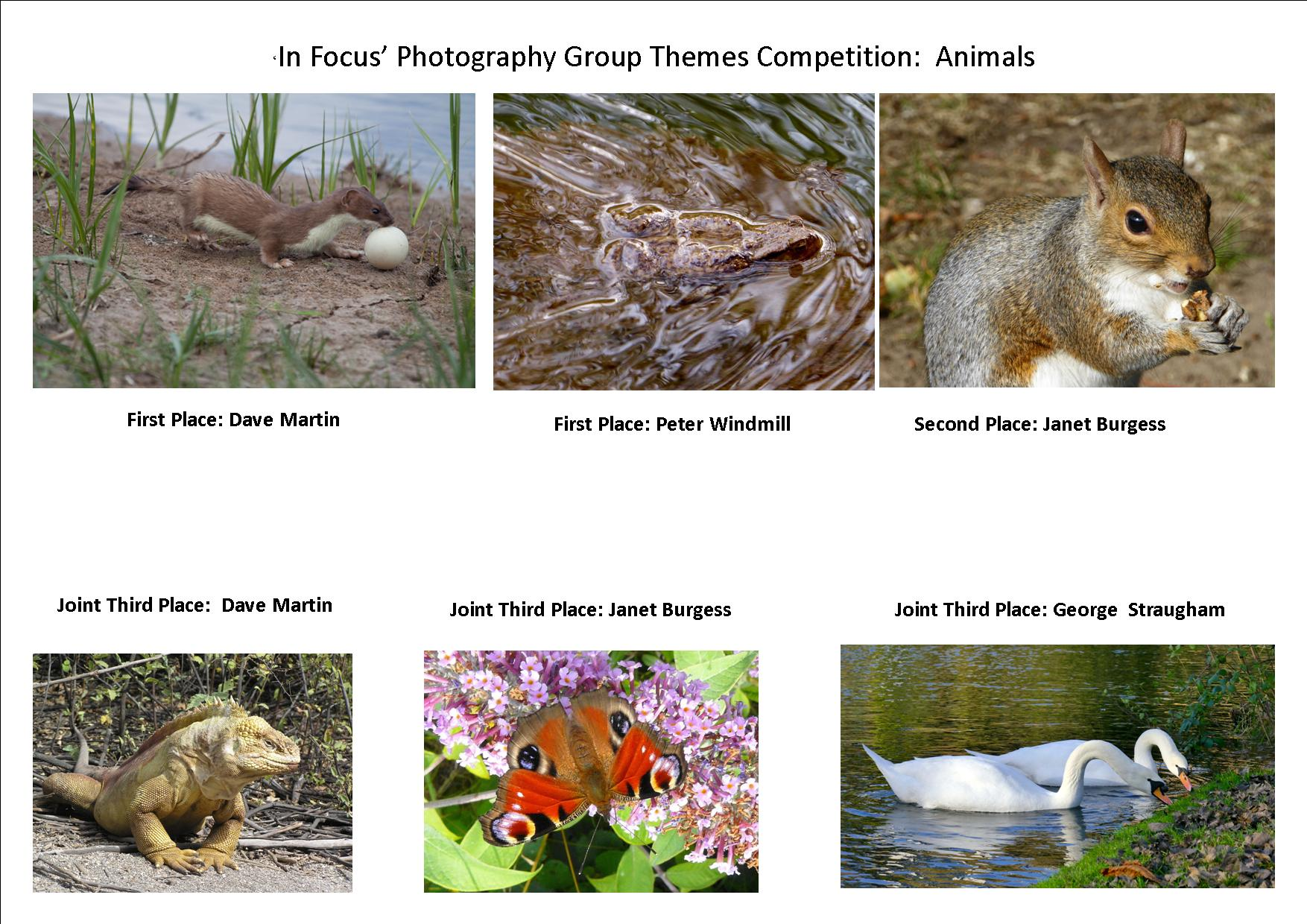 Animals Competition Results