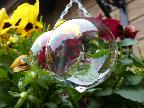 Hanging Basket - Bubble-ised