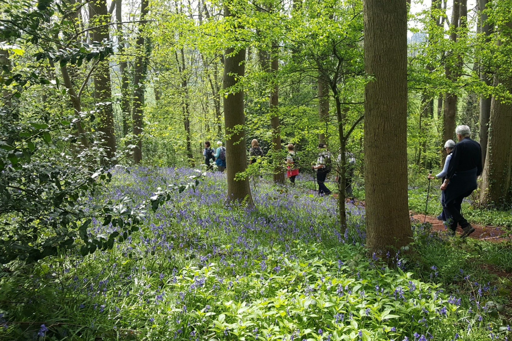 Bluebell time in Ashton Court