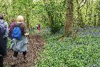 Lords Wood 4th May 2018