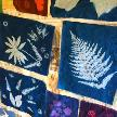 Results of our cyanotype session
