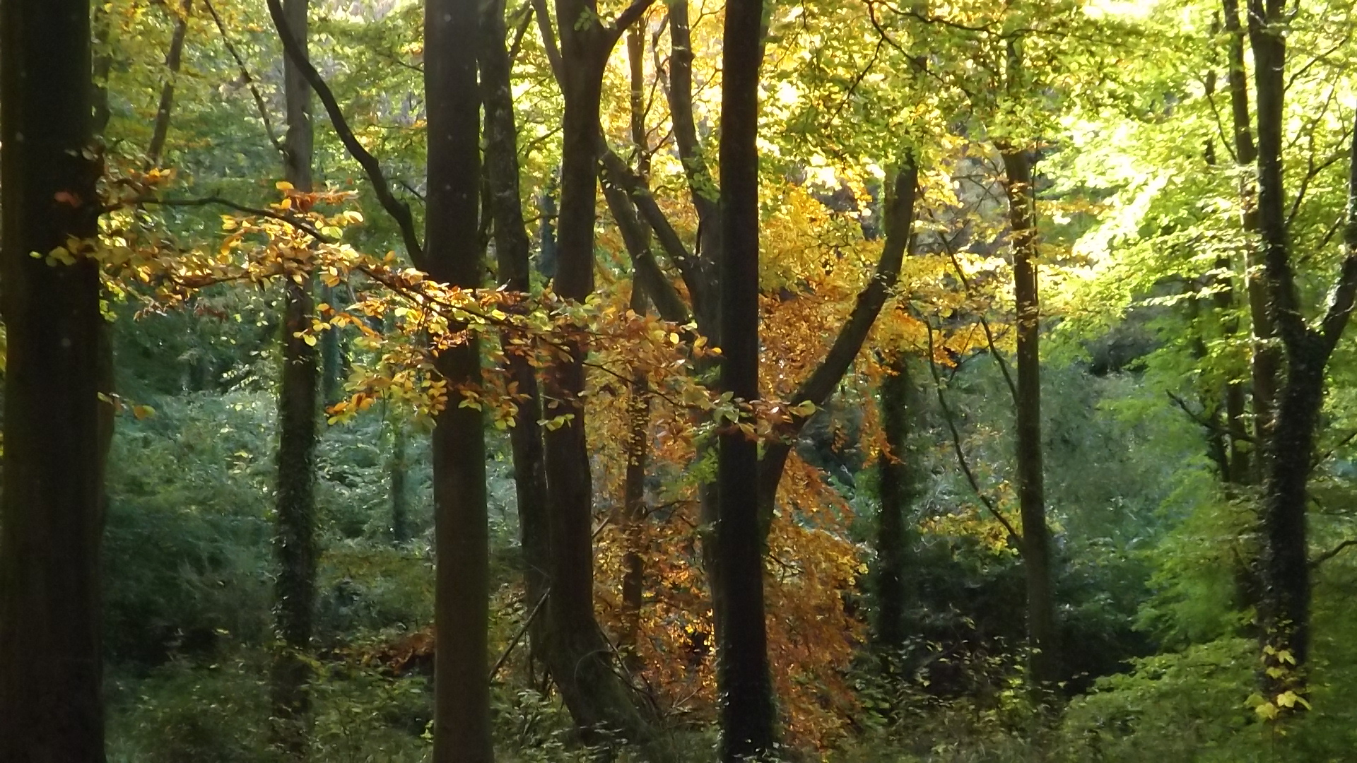Combe Hill Woods (4)