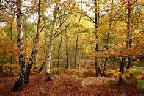 Cannock Chase in Autumn