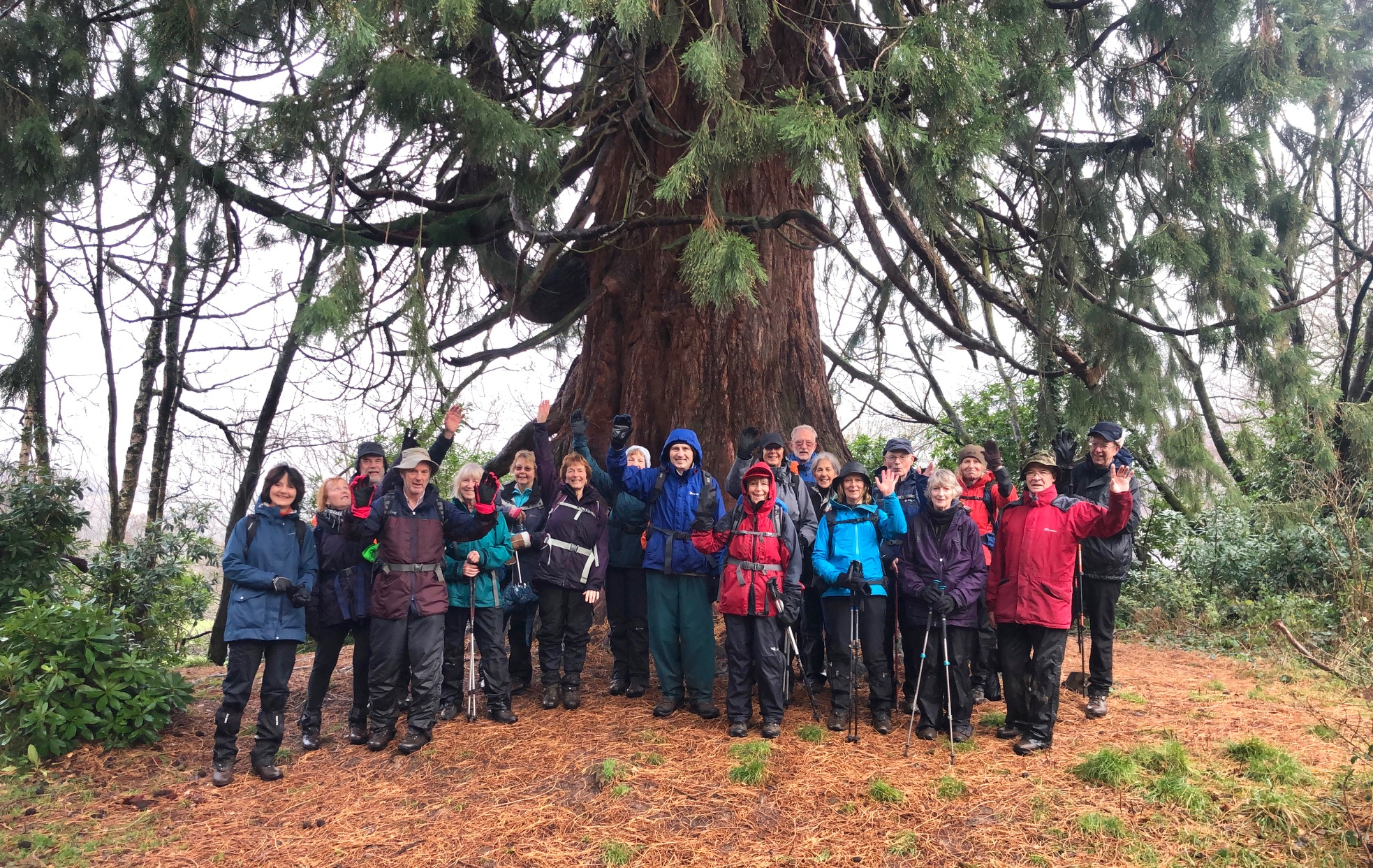 Hillwalkers and a Redwood Tree