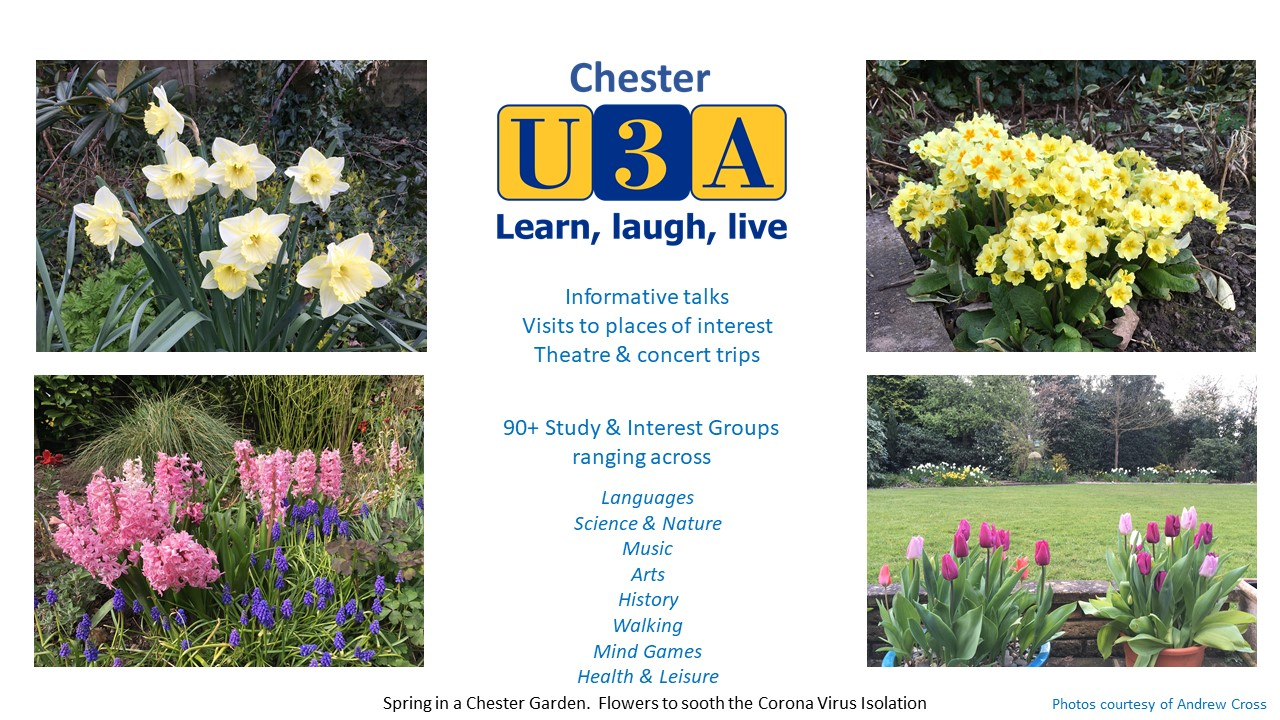 Spring Flowers in a Chester Garden