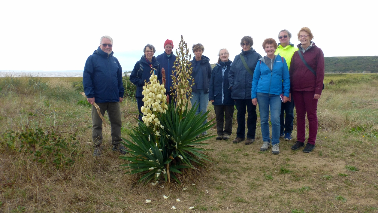 Members with Yucca recurvifolia