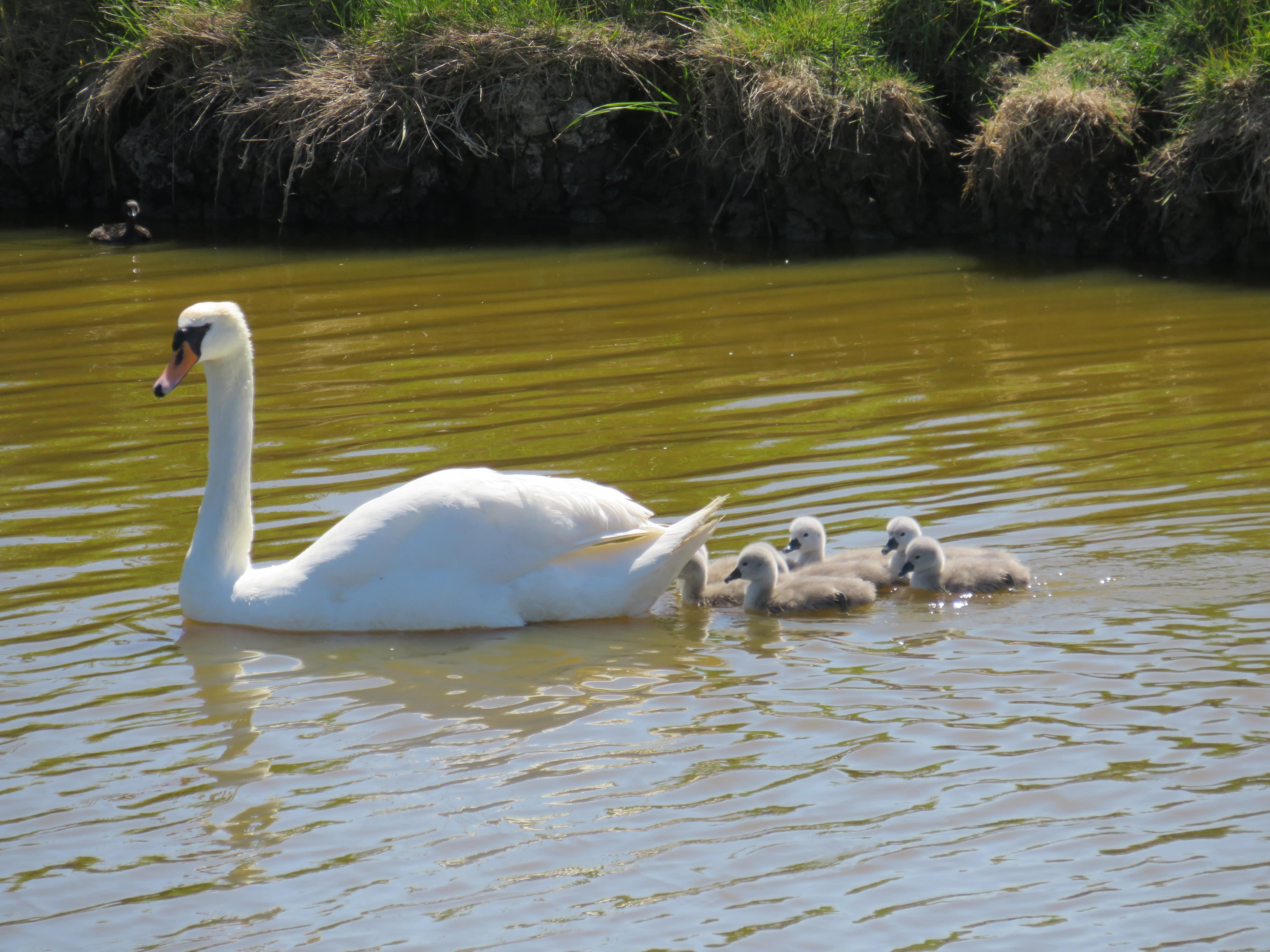 New Family on the Creek - May 2020