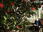 Old story teller reads to old camellias!