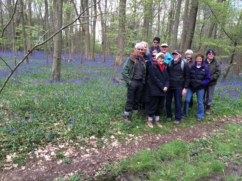A good year for bluebells