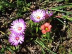 Flowers of the Fynbos
