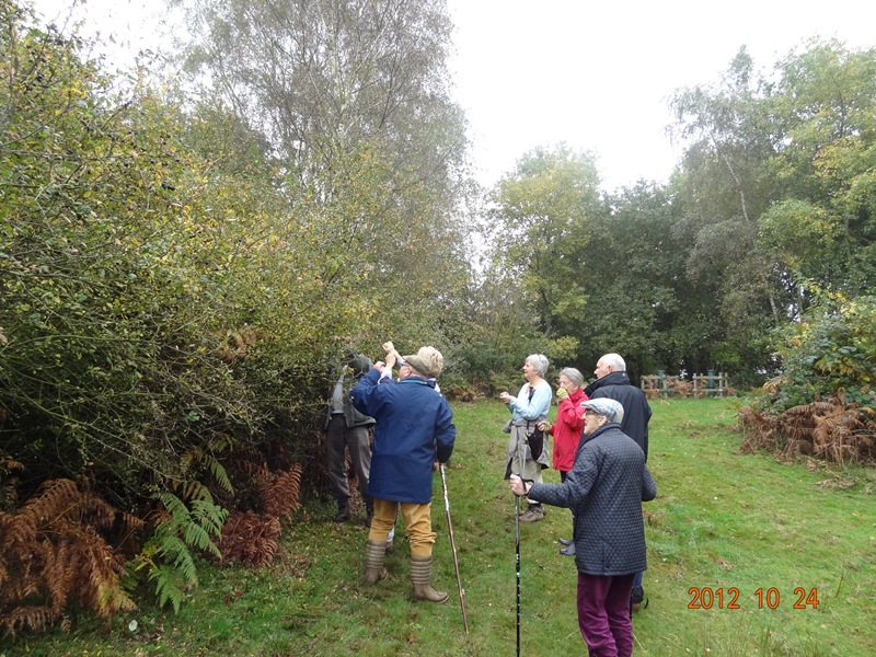 Picking sloes at Market Weston Fen