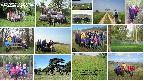 U3A walking Collage