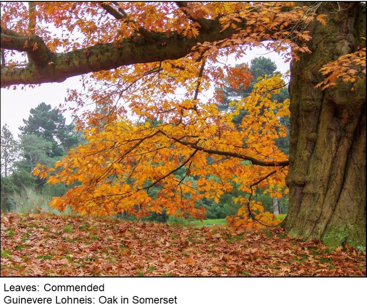 LEAVES  -  Commended