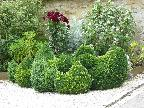AC01 Topiary chickens