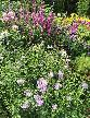 CB16 Pink border by lawn