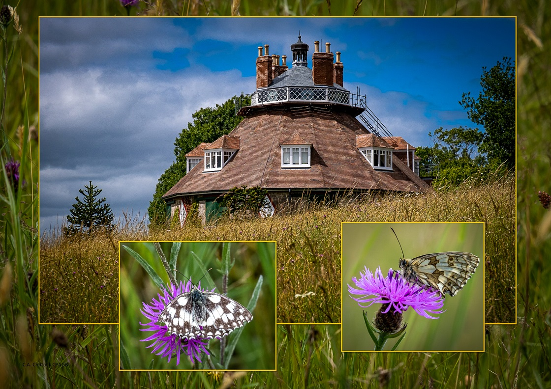 A la Ronde with marbled white butterfly