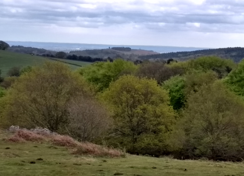 Bradgate from Beacon Hill - 29/04/19