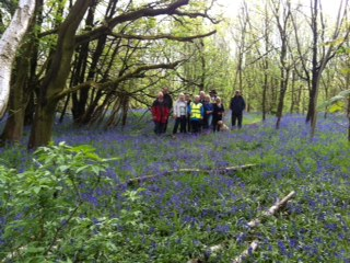 Bluebells in Ratby Burroughs 1/5/2017