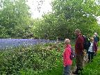 The Bluebell Walk from Groby Pool