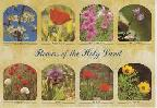 Flowers of the Holy Land