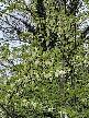 Abney Park visit 29 April 2021