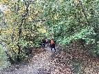 Epping Forest - walk before Lockdown 2