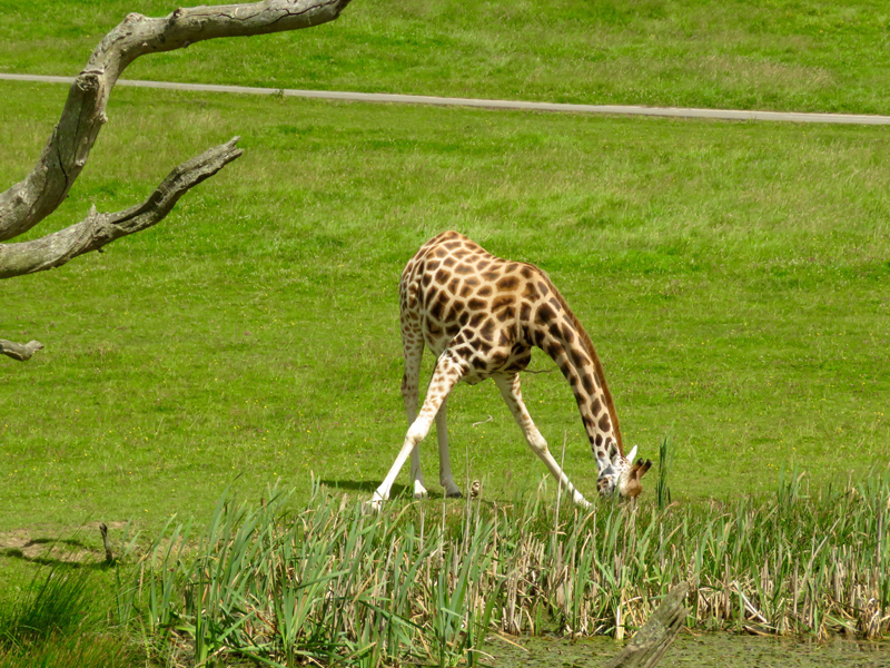 Longleat 2 by Mike Sisson
