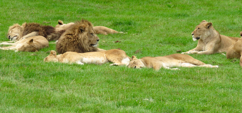 Longleat 3 by Mike Sisson