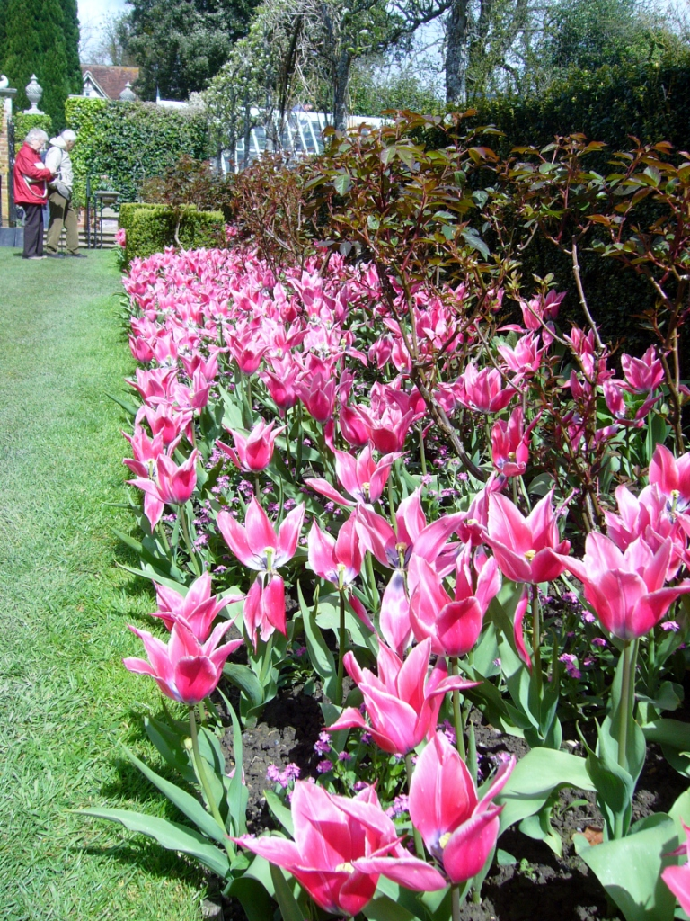Tulip border at Pashley Manor
