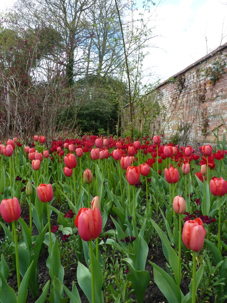 Tulips at Pashley Manor