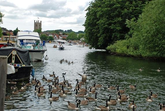 Henley Crowds by Anne Webster