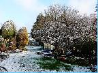 """1st Margaret Mayes-""""Flowers in Snow"""""""
