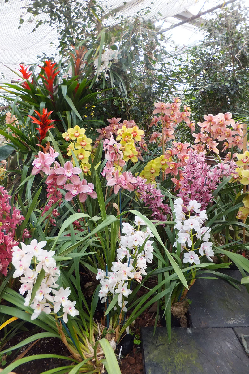 McBean Orchids March 2015