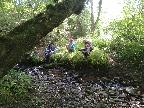 Down in Dingly Dell 3 Elves Conspire