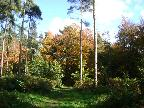 Autumn in Maulden Woods