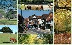 Lyndhurst & District