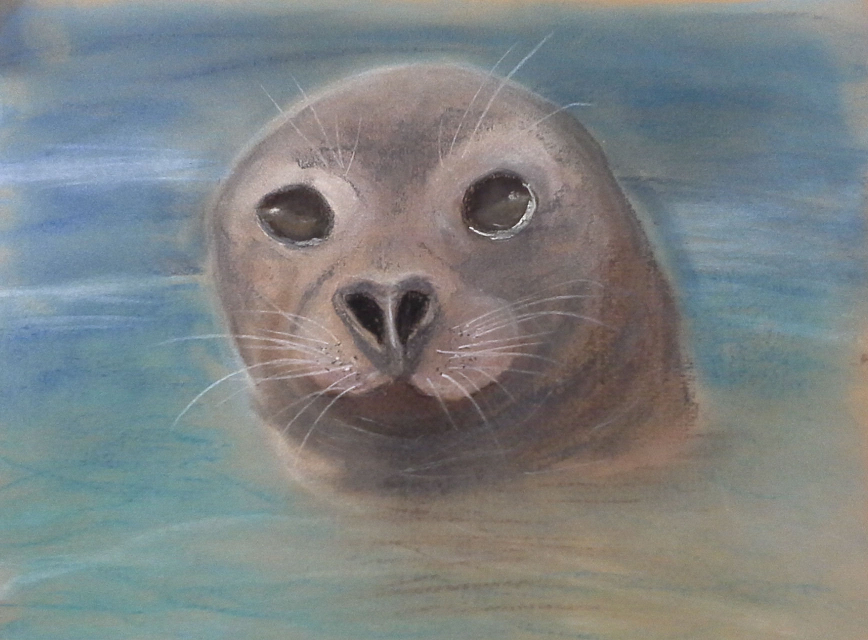 Val Taylor - Summy the seal in pastels