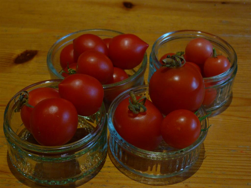 Tomatoes for judging