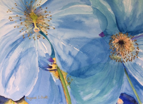 Himalayan Poppies - Margaret Scott