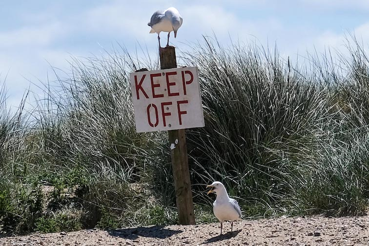 Sea Gulls with a message