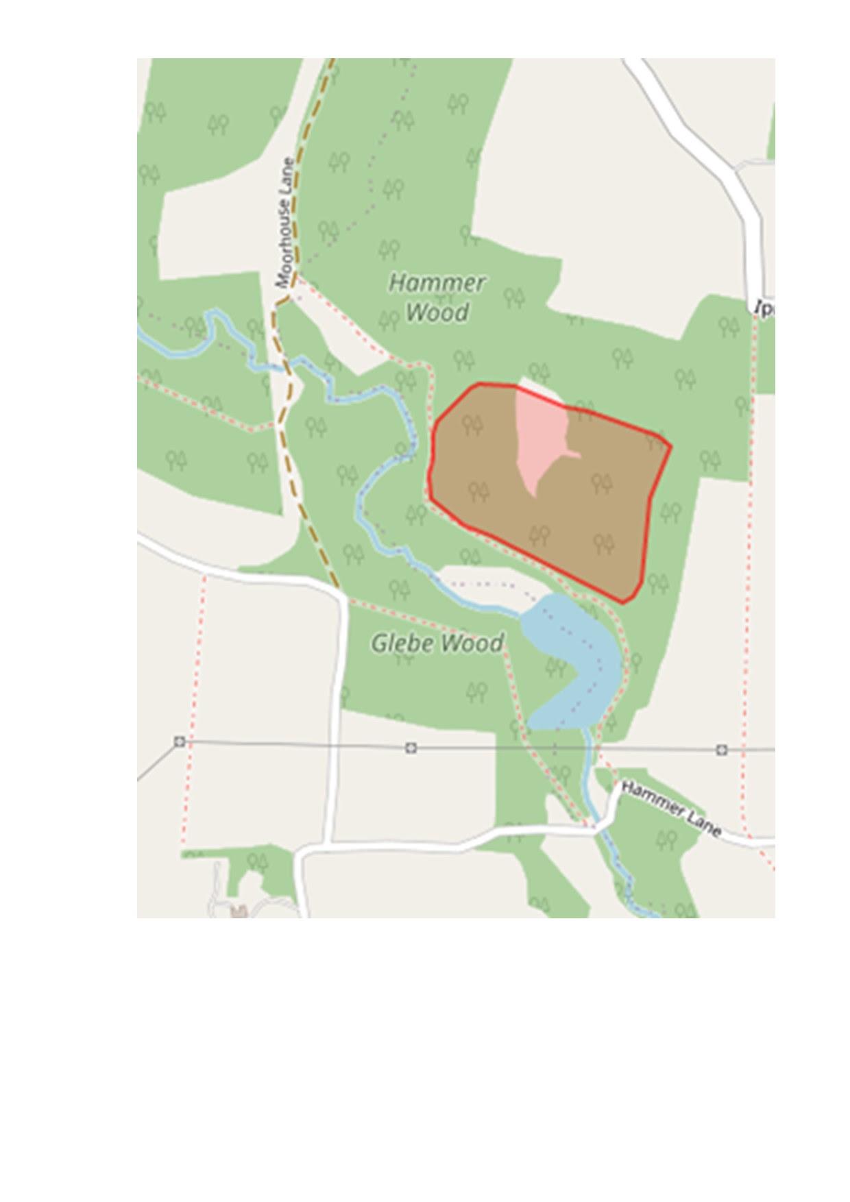Hammer Pond Walk
