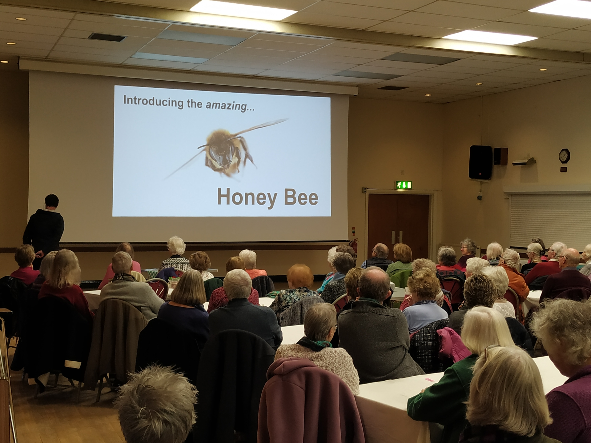 The Amazing Honey Bee - click for text