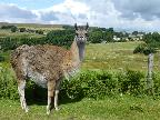 One of our Local Fauna