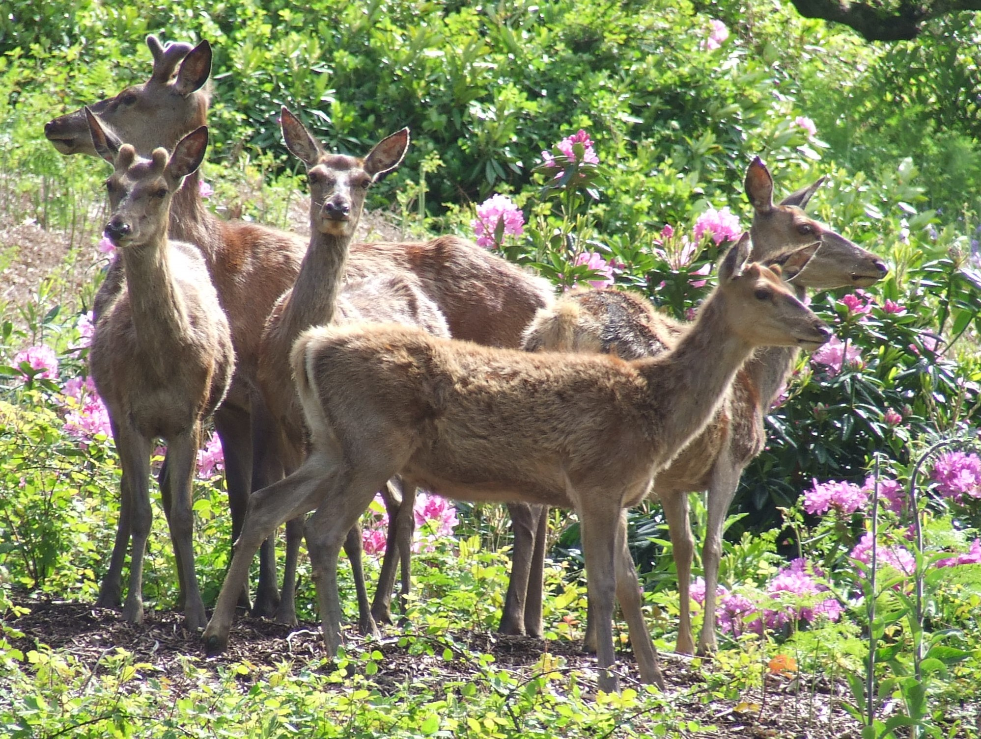 Deer at Margam Park