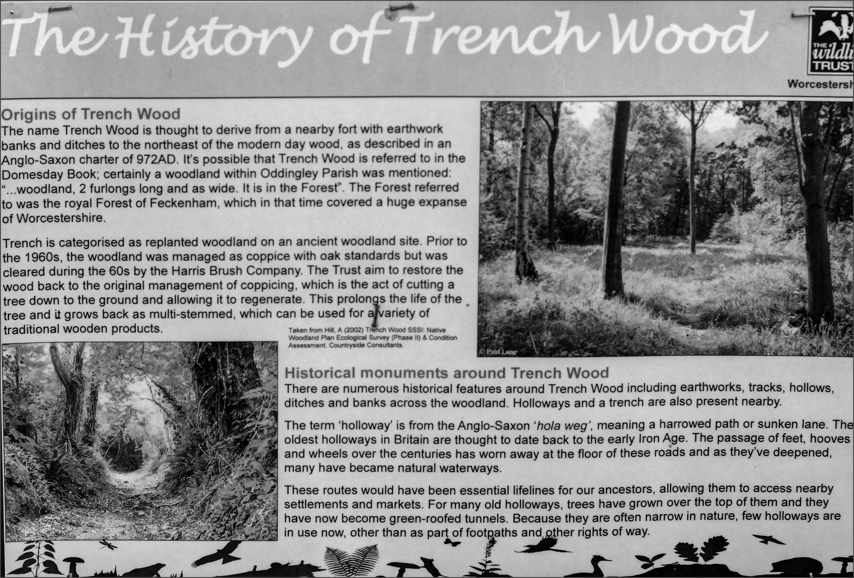 Potted History of Trench Wood