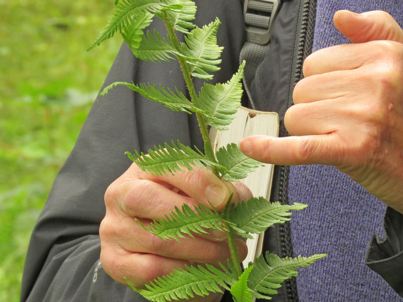Jackie tells us about ferns