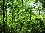 Shades of green, Ipsley Alders