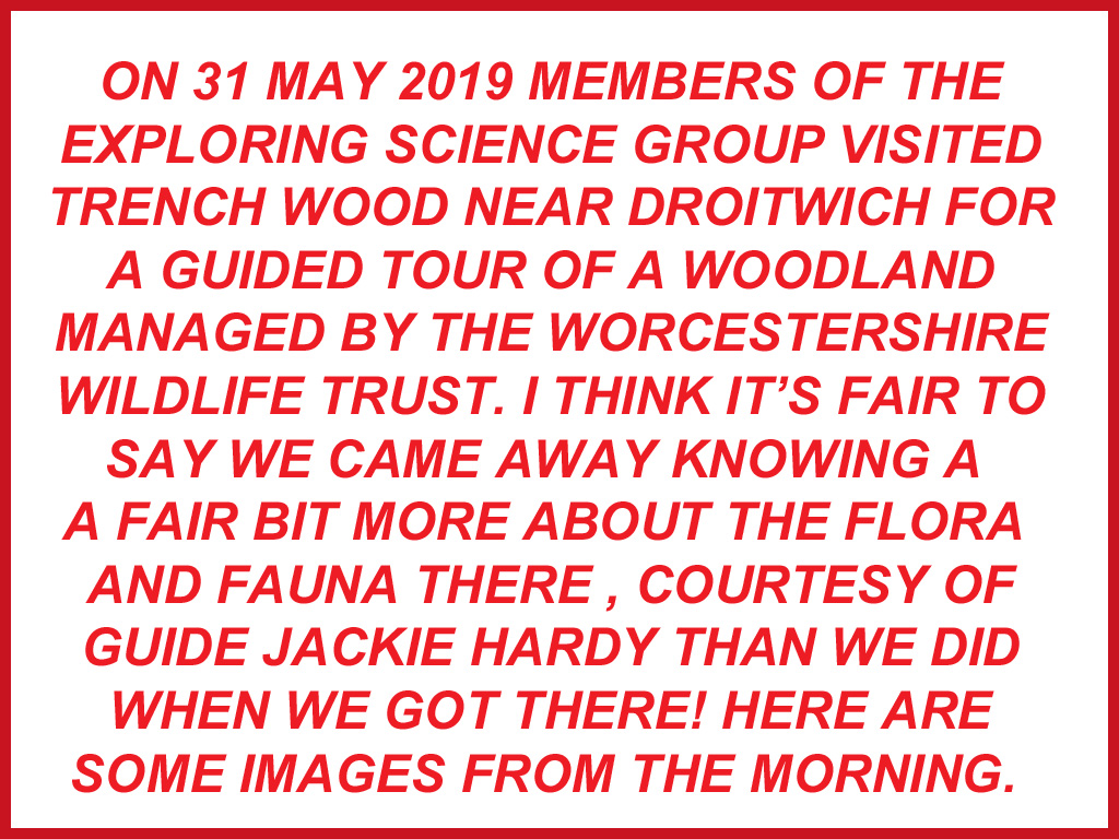 Visit to Trench Wood 31 May 2019